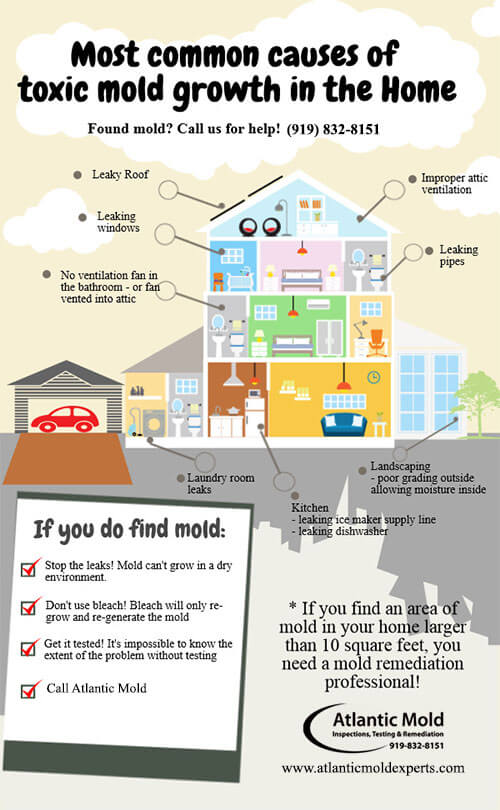 mold infographic