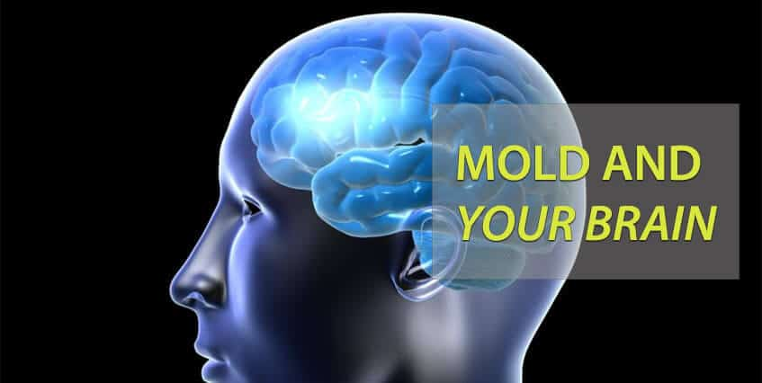 mold and your brain