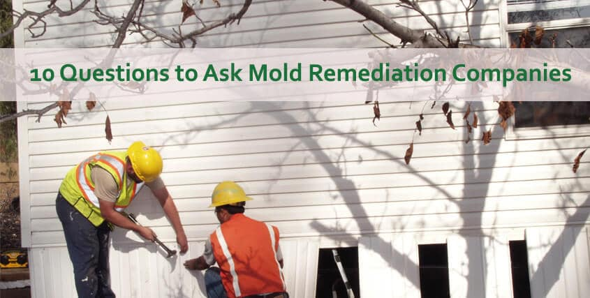 mold remediation workers