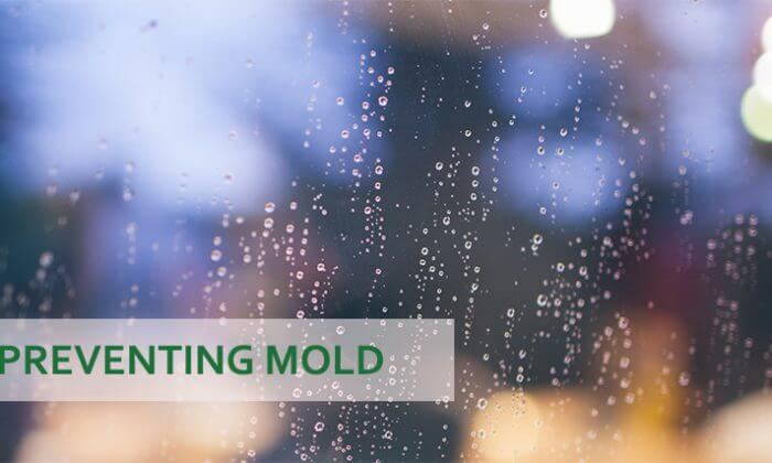 wet window and the words preventing mold
