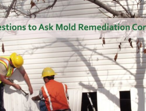 10 Questions To Ask A Mold Remediation Company